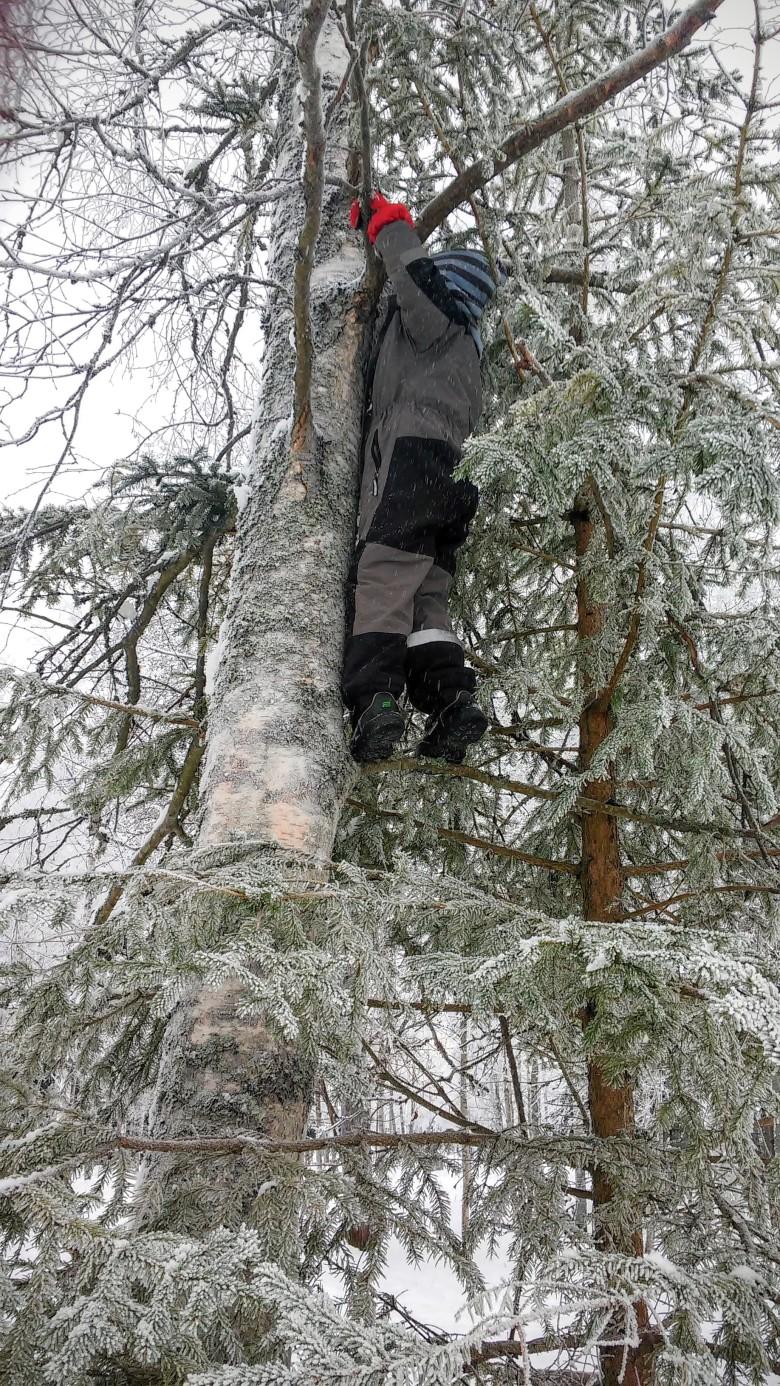 爬樹的瑞典小孩