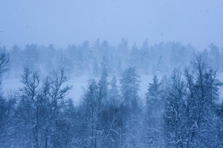 暴風雪下的森林