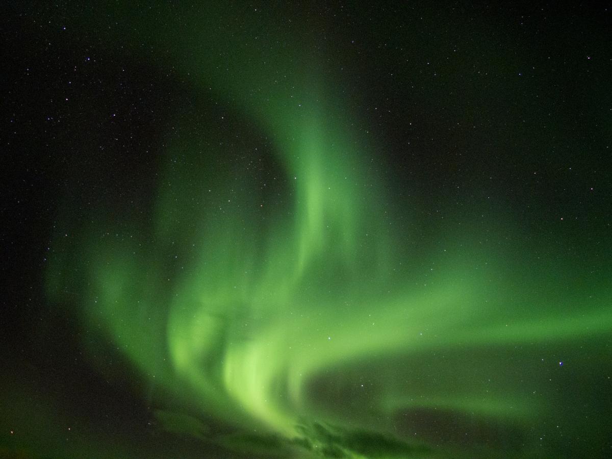 尋找北極光之旅 – 北歐的森林