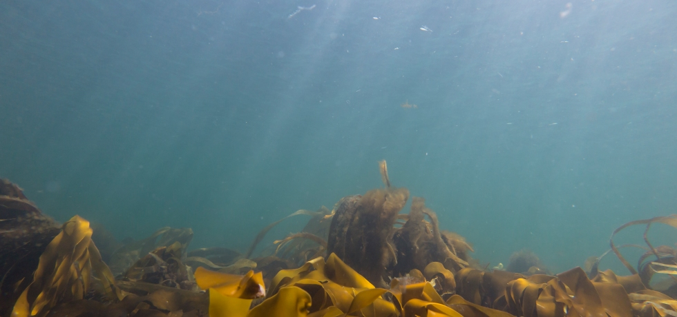 Diving at Coral Beach
