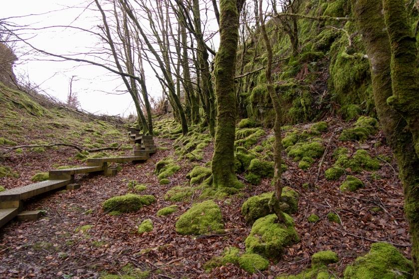 Cavan Burren Park的遠足小徑