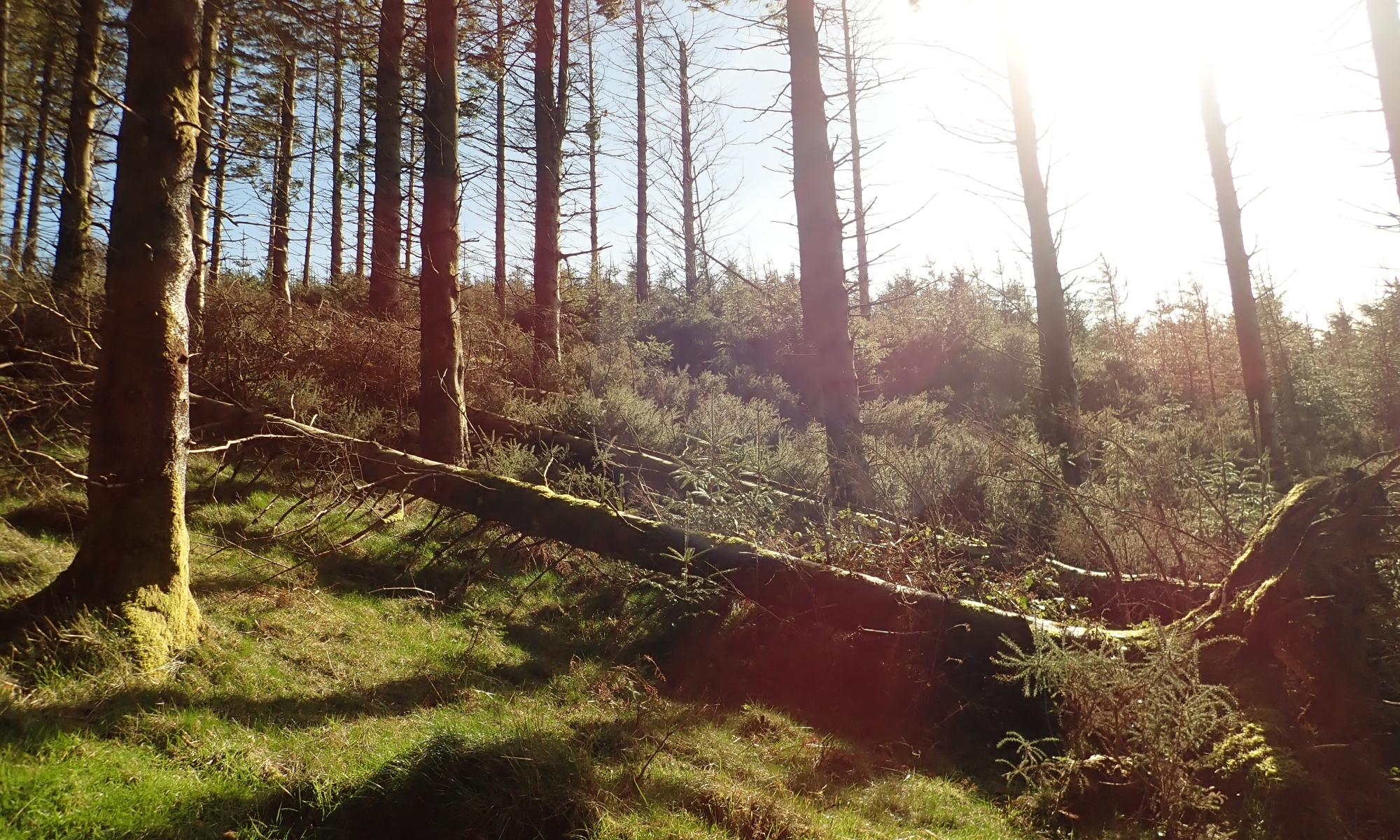 Djouce Woods - Deerpark Walk