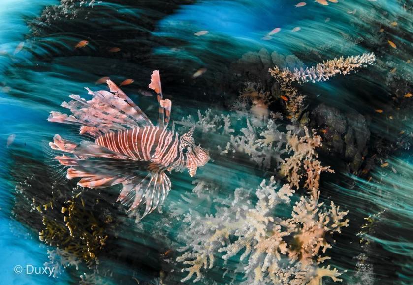 Paul Duxfield 水底攝影