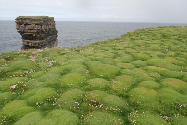 草皮的形態很可愛,像是一顆顆棉花糖鋪在地下似的。